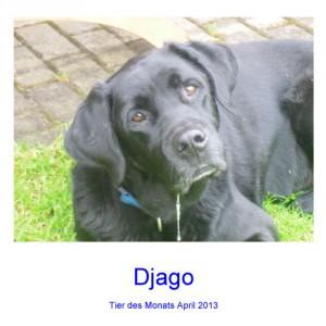 Djago - Haustier des Monats: April 2013