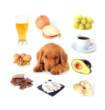 Giftige Lebensmittel Hund