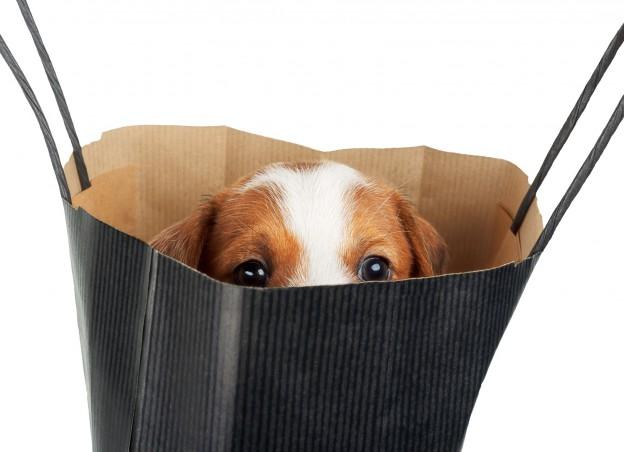 Hundewelpe in Tasche