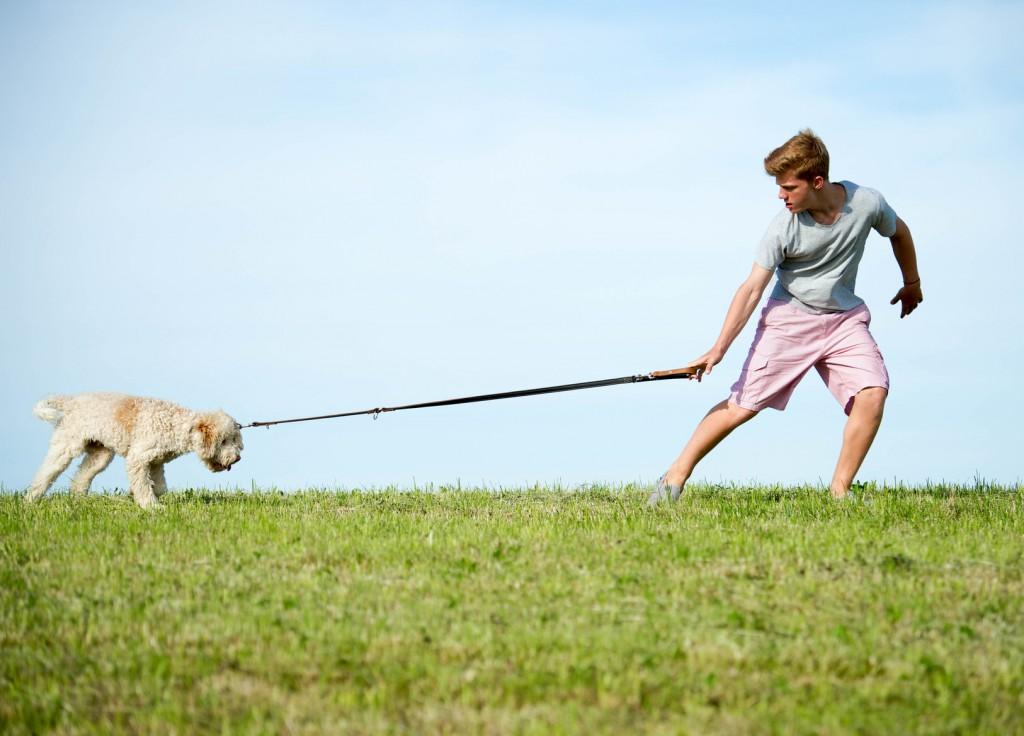 Hund an Leine © [grafikplusfoto] – fotolia.com