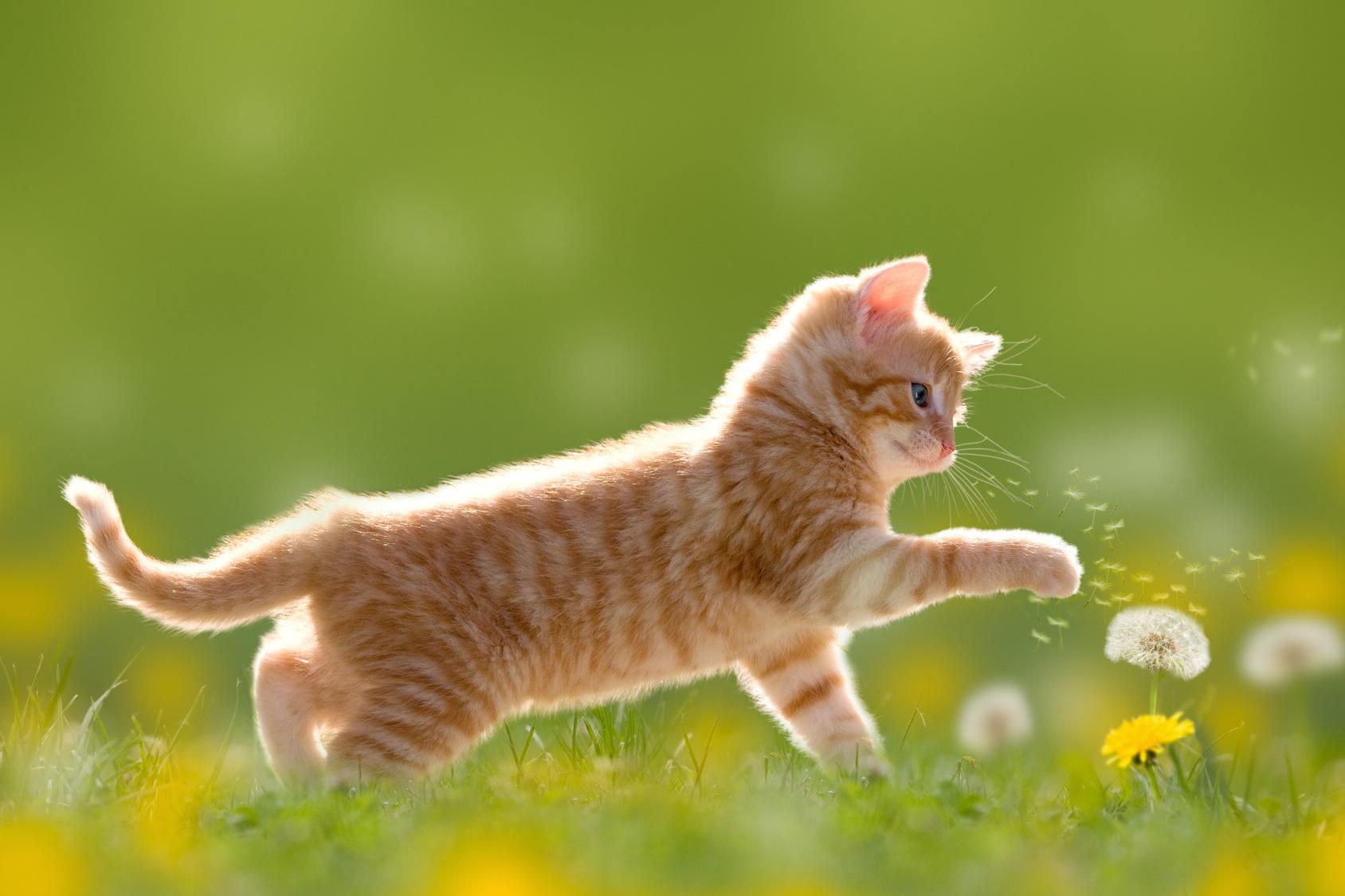 Das Richtige Futter Für Kitten Und Junge Katzen Rinderohrde