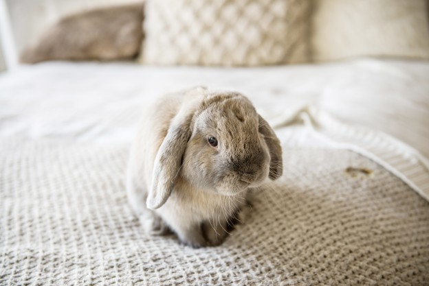 Suesses Kaninchen