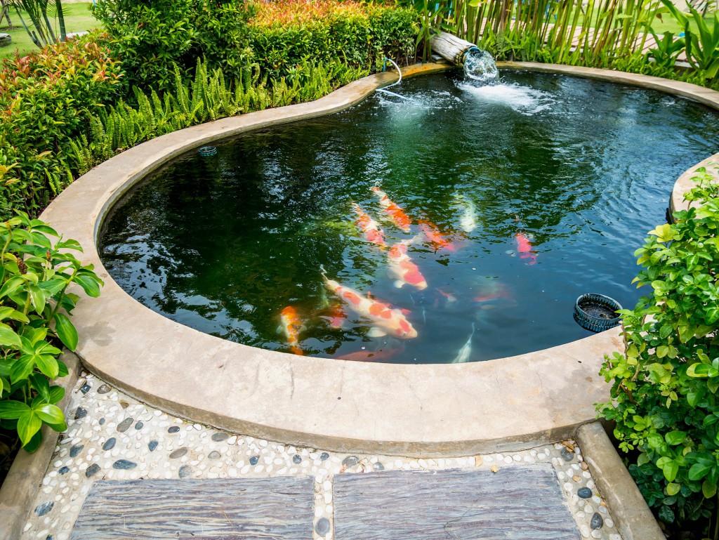 Gartenteich voller Fische © [Kwangmoozaa] – Shutterstock.com
