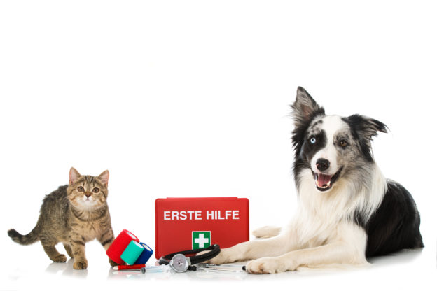 Erste Hilfe bei Hunden und Katzen