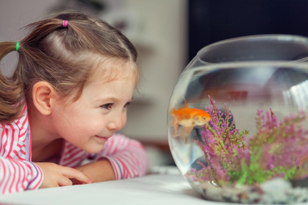 Kind mit Goldfisch