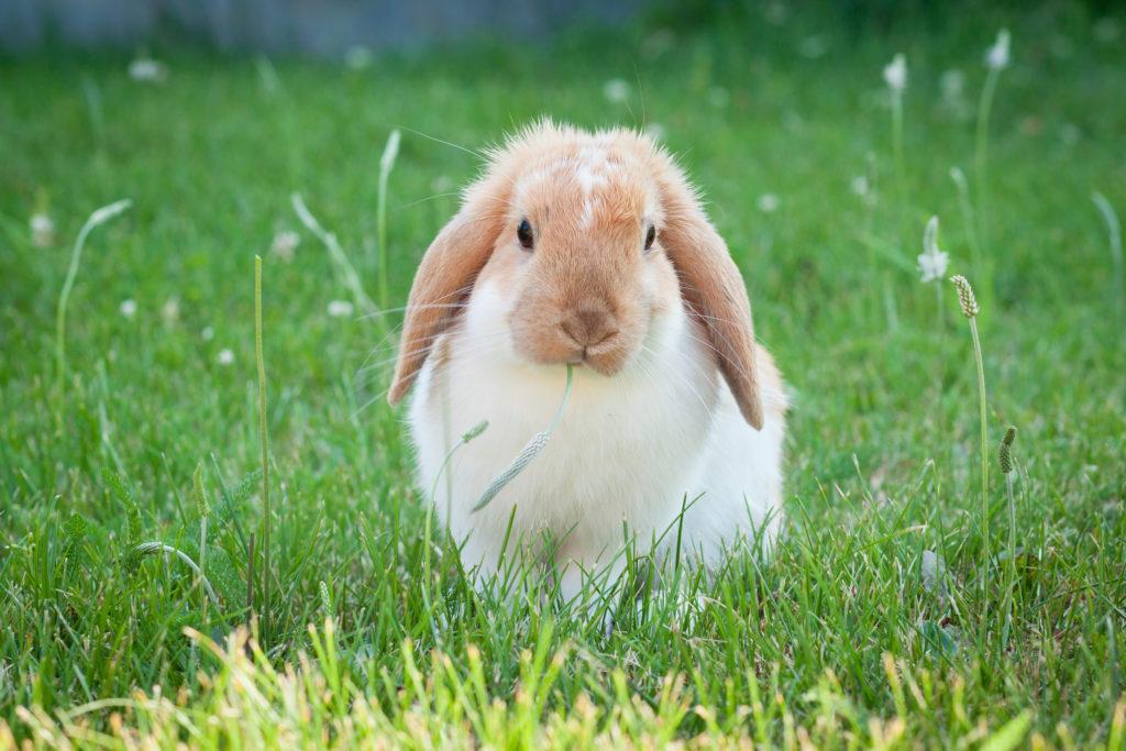 Kleines Kaninchen im Gras